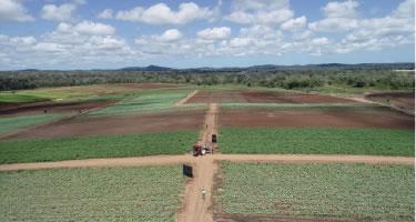 Fazenda Girassol